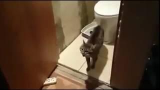 Кошка не даёт сходить в туалет