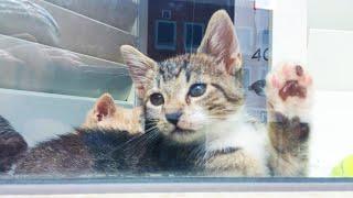 brown tabby kitten (super adorable!)