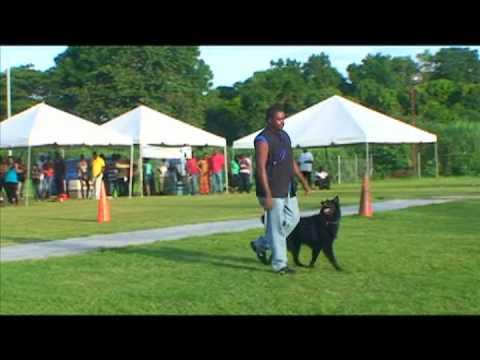 Trinidad Dog Show 2011