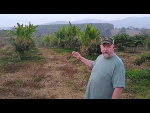 Organic Permaculture farm in Thailand, growing food