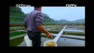 Goldfish Breeding - Documentary Journeys in Time 09/04/2012 PART 2 OF 2