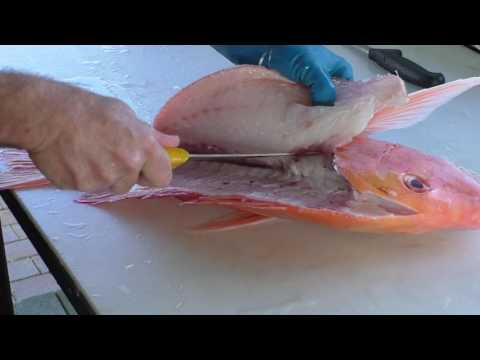 Filleting A Red Emperor