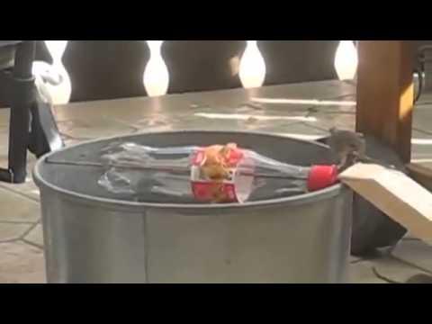 Pi ge souris ing nieux youtube - Piege a guepe fait maison ...