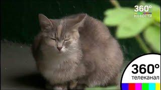 Подвал московской многоэтажки стал камерой смерти для котят