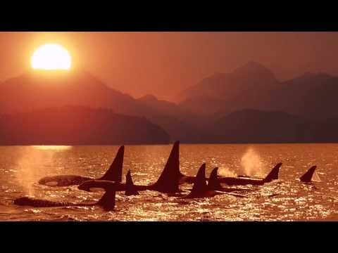 Kamal: A Whispering Dream/Raga for a Whale - Meditation Relaxation