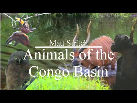Animals of the Congo Basin