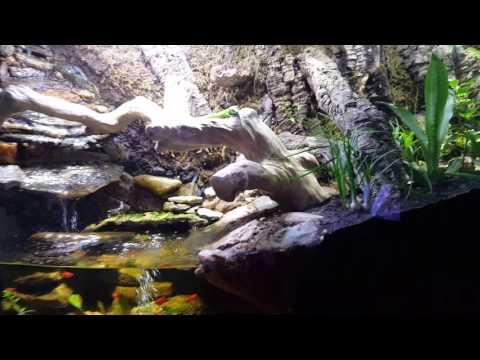 Giant Day Gecko, Fiddler Crabs, Tree Frog, Anoles, Long Tail Lizards, Fish, Waterfall Terrarium