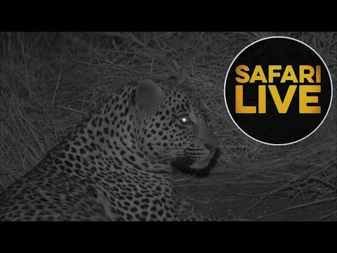 safariLIVE  - Sunset Safari - July 16, 2018