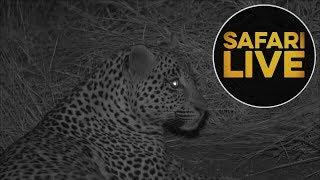 safariLIVE  - Sunset Safari - July 16, 2018