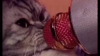 Cats meet with microphone