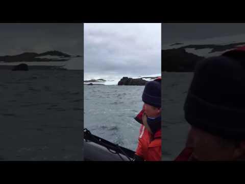 King George Island Antarctica - VacationJoe.com