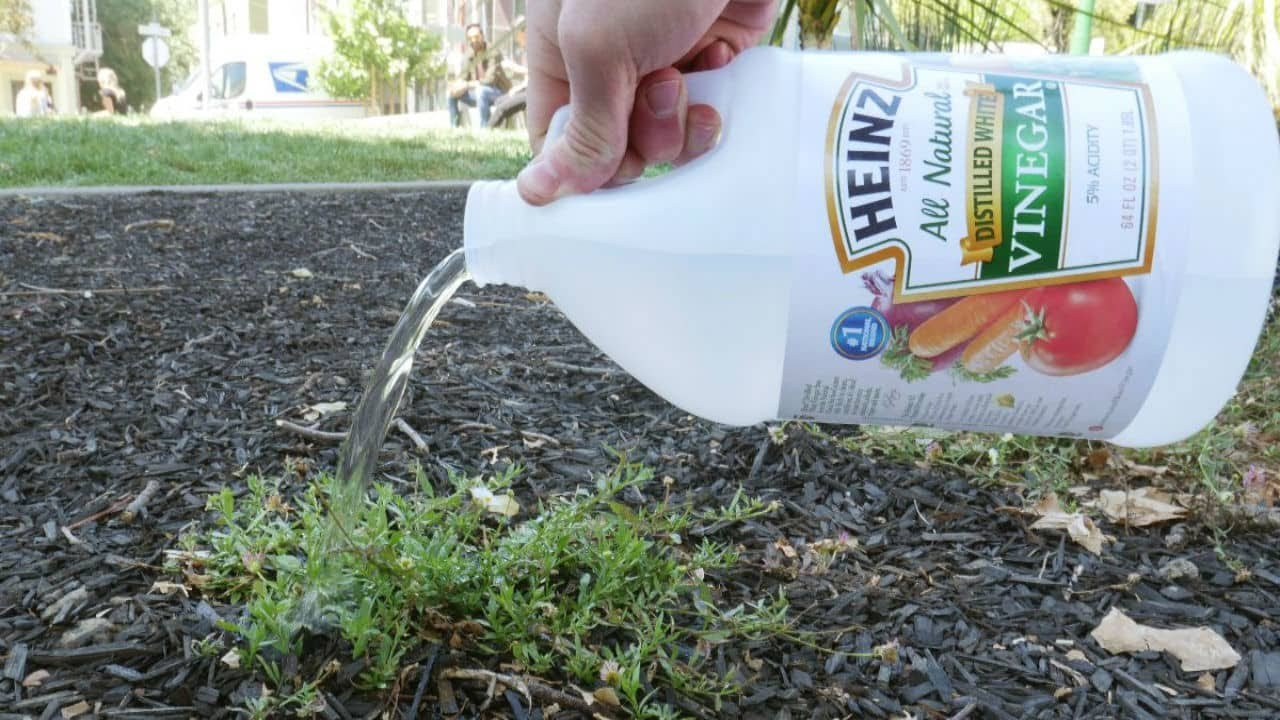 10 Uses For Vinegar To Make Natural Gardening Easy The