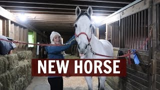 BRINGING MY NEW HORSE HOME
