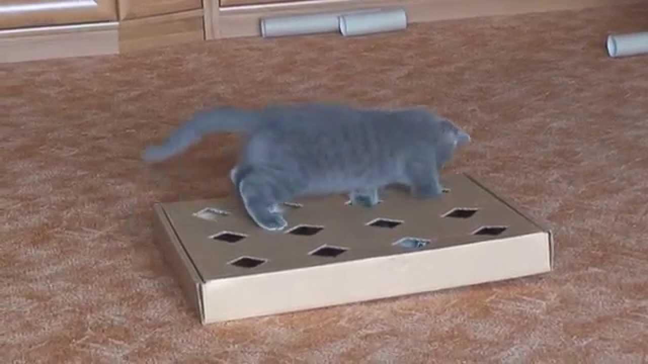 Как сделать игрушки своими руками для кошки?