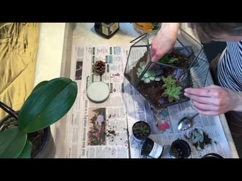 Comment Realiser Un Terrarium Plantes Grasses Youtube