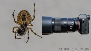 Sony A7R IV first impressions & macro photo & 4K video shooting of a garden spider @breakfast