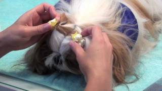 Grooming Series: Puppy Pigtails