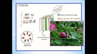 Растения  Опорные конспекты