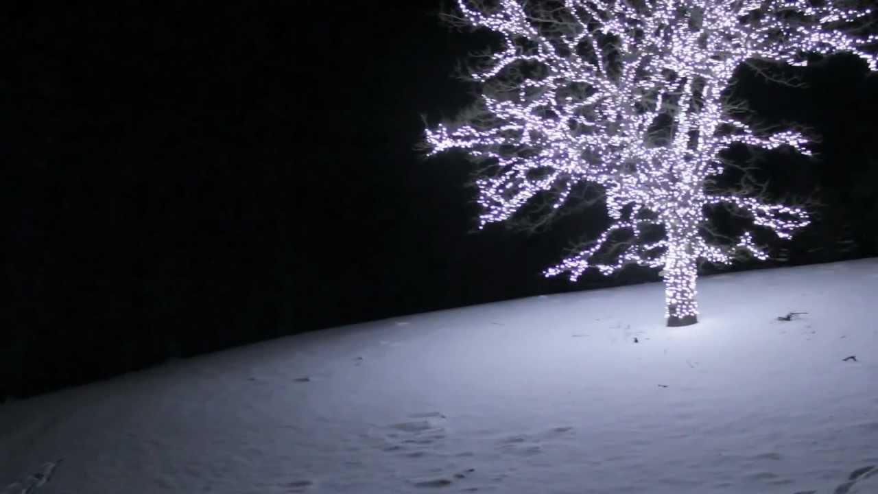 Jerry Byrne Lights Out