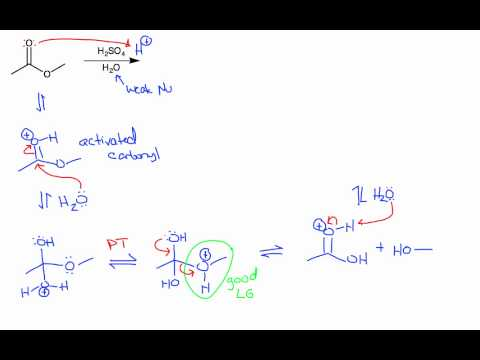 Ester Hydrolysis (Acidic and Basic Conditions)