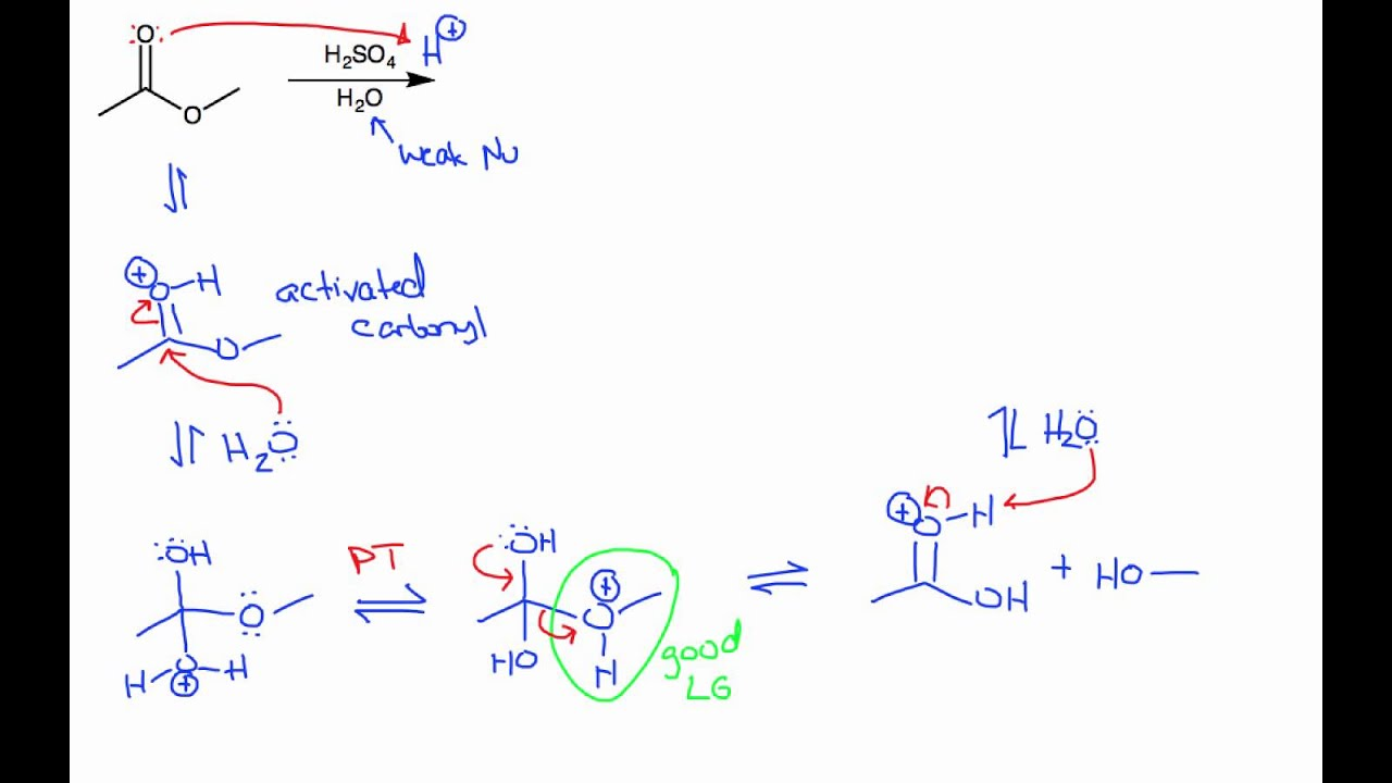 ester hydrolysis The hydrolysis of ester, glucoside (in carbohydrates), and amide (in proteins) bonds plays an important part in the vital activities of all organisms—that is, in.
