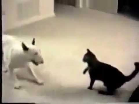 Lustige verrckte Katze Kampf mit einem Hund – Youtube katzen videos 2014