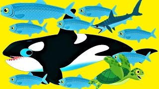 Play Baby Games To Learn About Sea Animals - Explore The Ocean Fun Game For Children