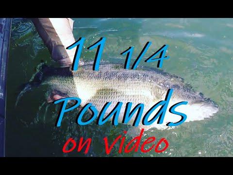 Fishing Lake Burton With Dream Catcher Fishing Guides! CRAZINESS