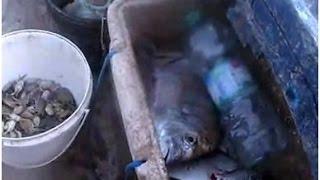 Pescando sargos y mojarras en la Bahía de Cádiz