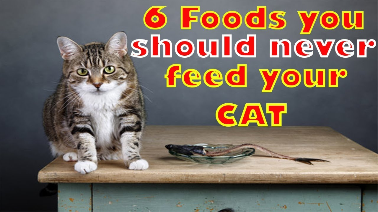 6 Foods you should never feed your Cat   6 dangerous foods for cat
