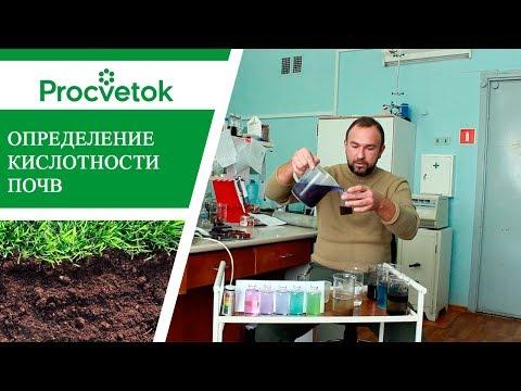 Как в домашних условиях определить кислотность почвы на участке