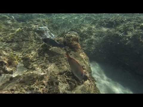 Moray Eel !!! -  Ke'e Beach Snorkeling - Haena Park, Kauai, Hawaii