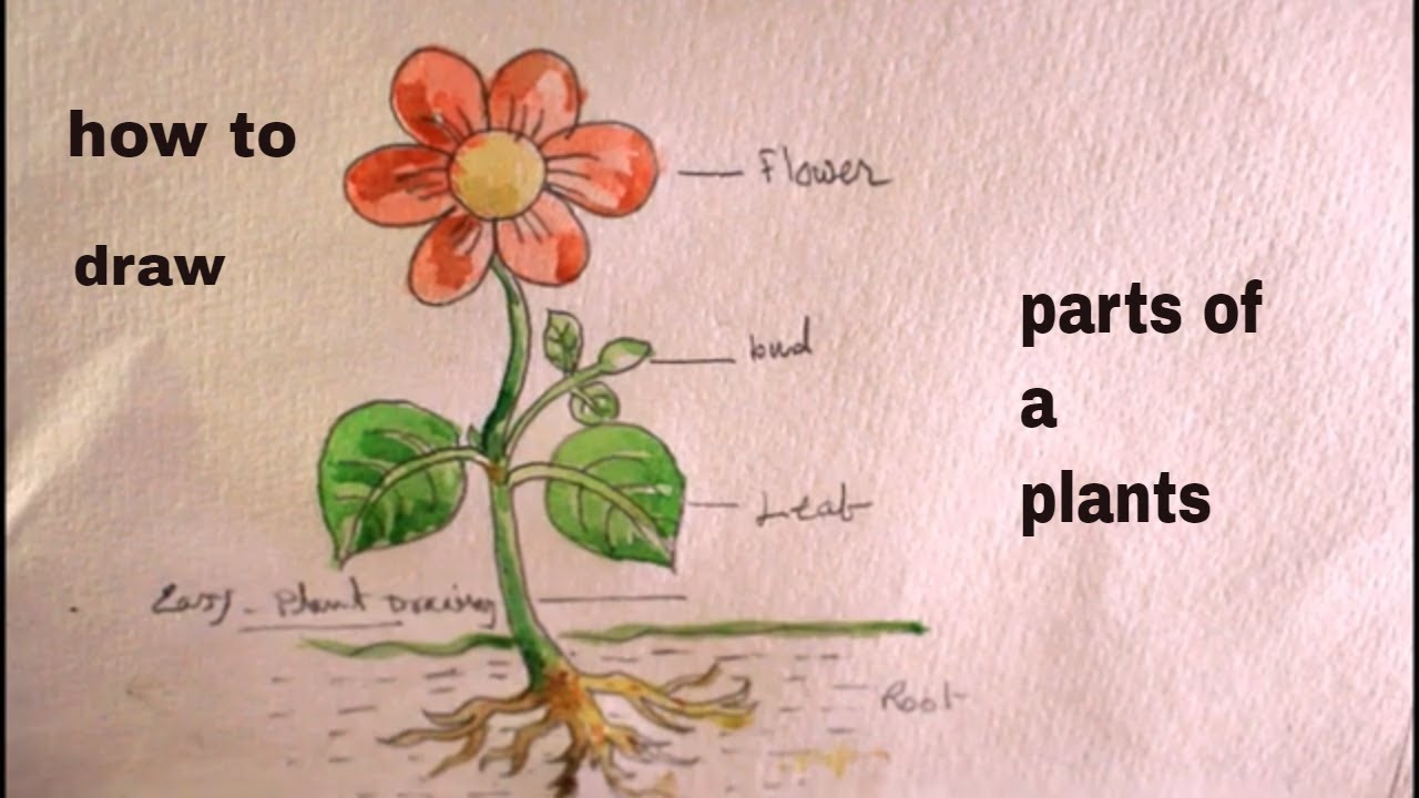How TO Draw part of plant/a plant drawing/draw a part of plant step by step/part-2 #1