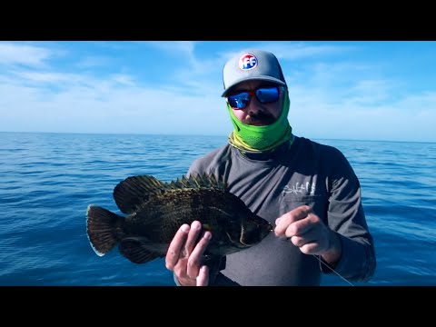 Triple Tail Fishing Tactics - Lures, Baits, And Locations.