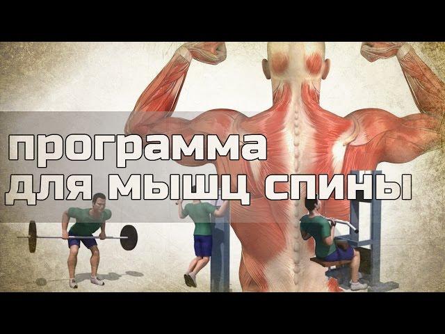 Как накачать спину. Программа тренировок для спины.