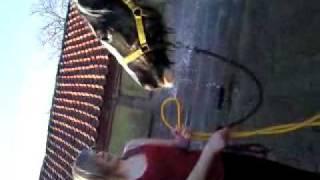 Me hosing Spotty