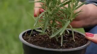 Plante care alunga insectele