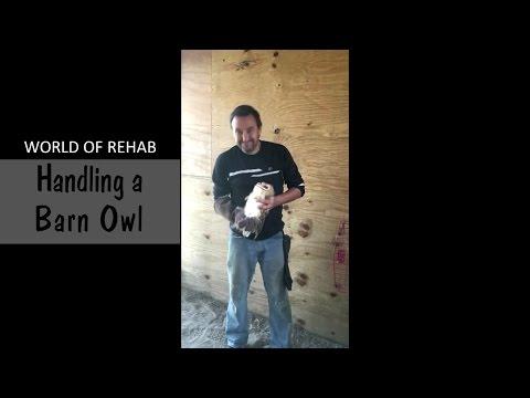 World of Rehab - Handling a barn owl