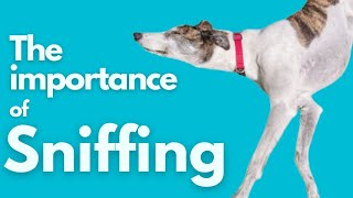 The importance of sniffing