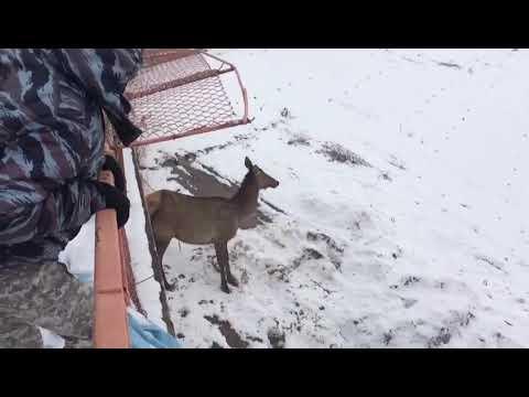 Животные вновь из леса вышли к людям в Усть-Куте
