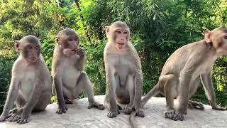 จุดชมลิง เลี้ยงอาหารลิง เขาชัยภูมิ ทีมงานครูบาเฉลาโฟโต้/พระดีเจ/สณ.เอก/บิวภาคภูมิ/อ.เป้