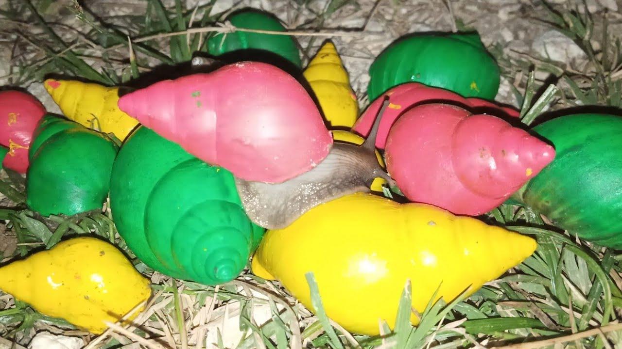 Download mencari dan menemukan siput warna warni, siput rainbow