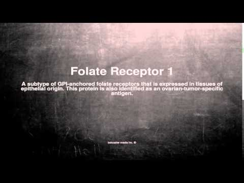 Medical vocabulary: What does Folate Receptor 1 mean