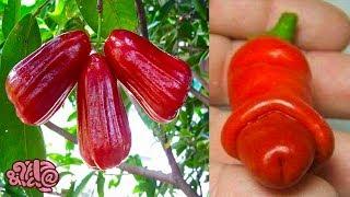 10 Tropical Fruits You