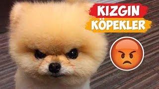 Kızgın Köpek Videoları! | [2018 Derleme]