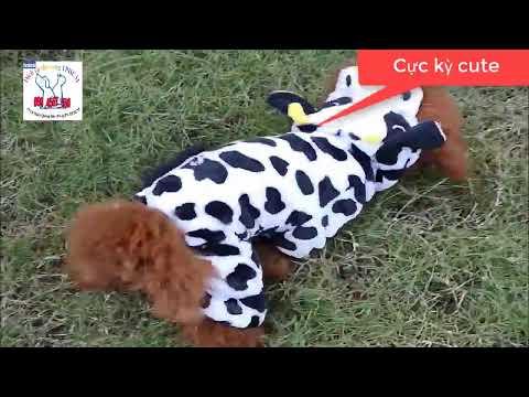Áo Quần Cho Chó Mèo Hình Con Vật Ngộ Nghĩnh (4 Chân), Quần Áo Thú Cưng