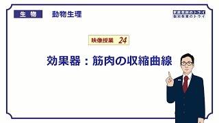 【高校生物】 動物生理24 効果器:筋肉の収縮曲線(22分)