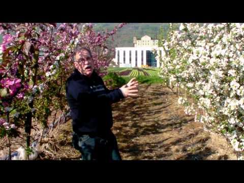 Wie schütze ich Apfelblüten vor Frost - Frostschutzberegnung