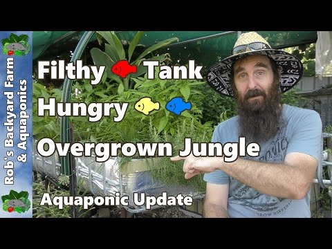 FILTHY FISH TANK, Hungry Fish & Overgrown Jungle - Aquaponic Update