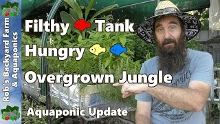 filthy fish tank hungry fish overgrown jungle aquaponic update